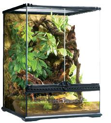 plante carnivore exoterra. Black Bedroom Furniture Sets. Home Design Ideas